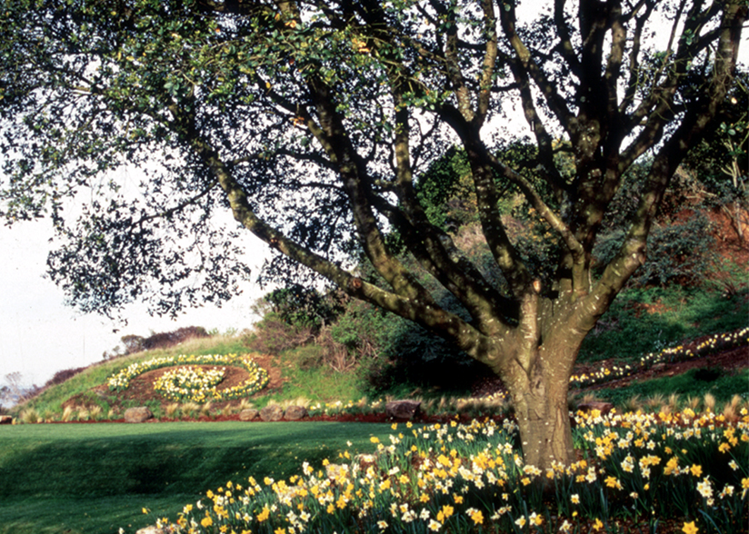 View from the Veranda_Topher Delaney_Garden 6